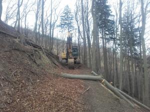 Waldwegebau und Naturschutz